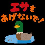 esa_agenaide_kamo.png